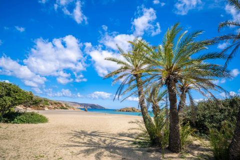 Palm trees and soft sand on Vai beach. Lassithi, Crete.