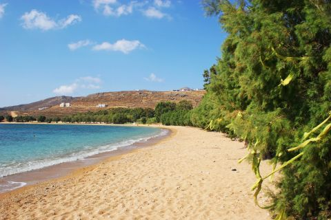 Verdant spots on the wonderful, sandy beach of Livadakia.
