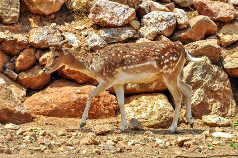 A lovely deer.