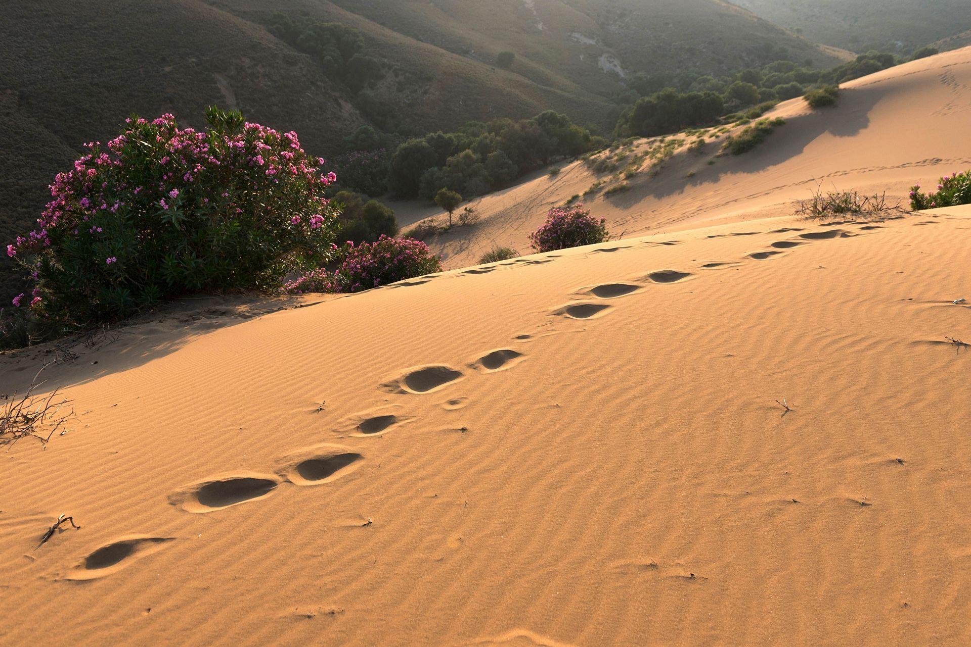 Lemnos island: Sand dunes