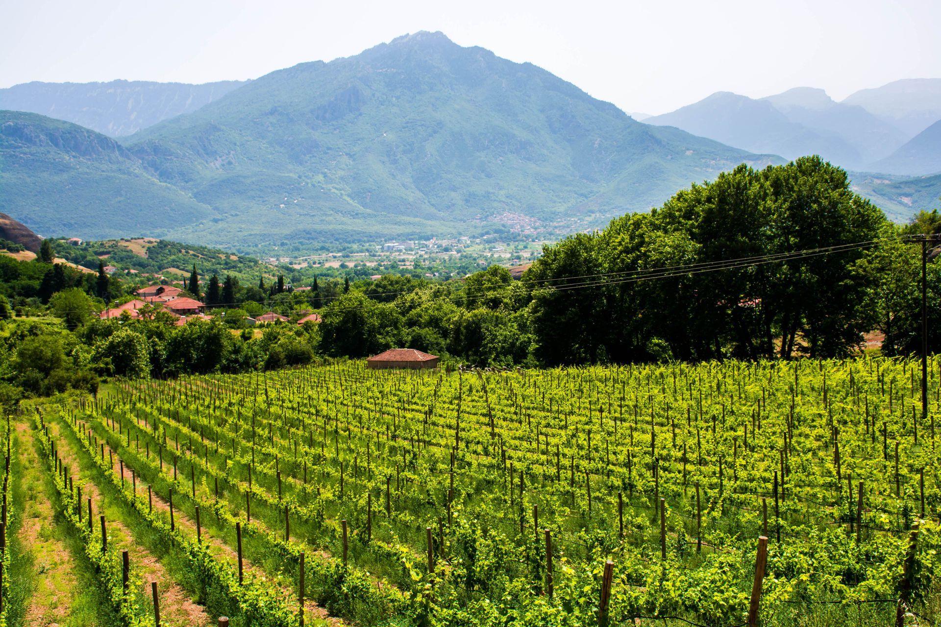 Wineries in Zagorochoria