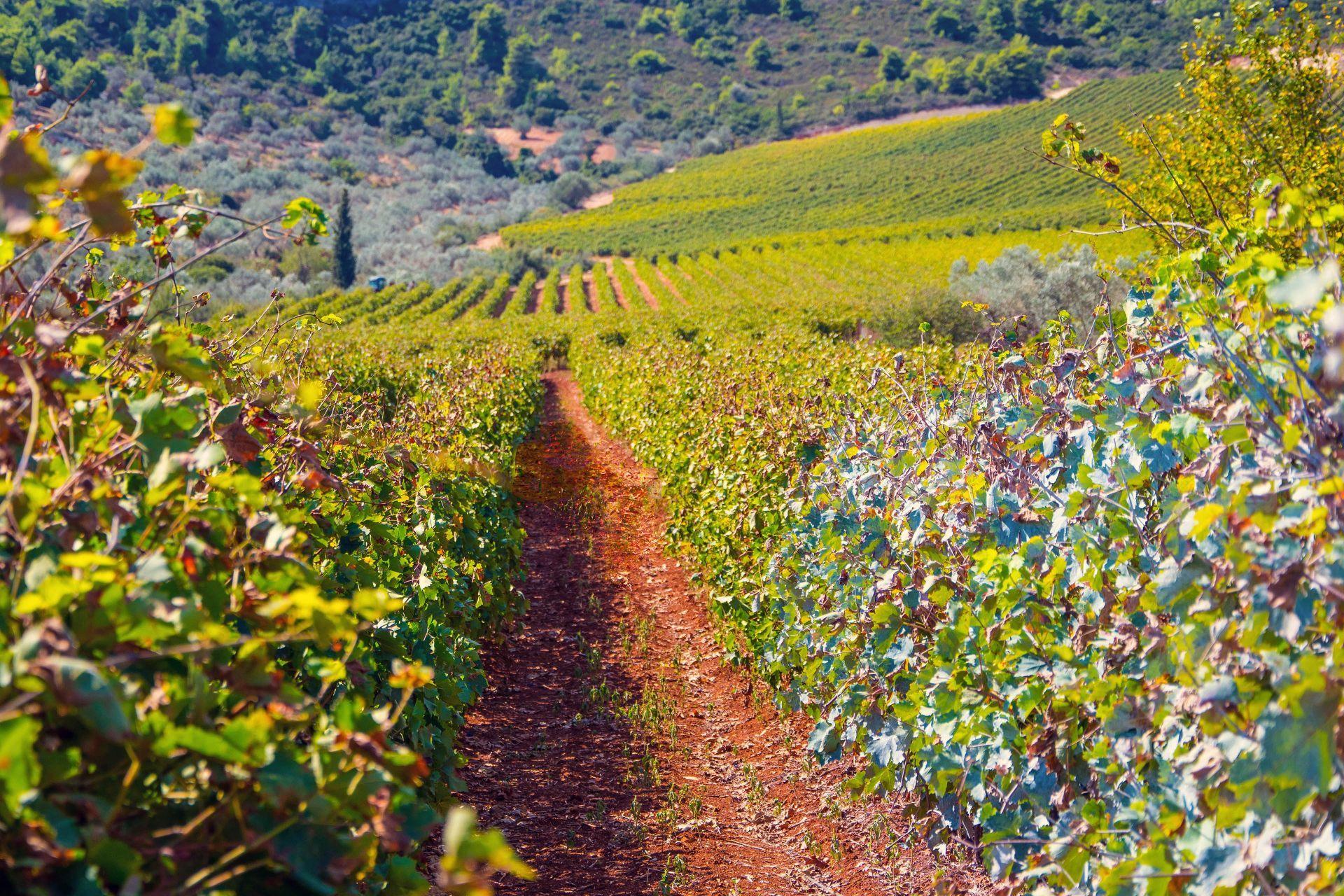 Wineries around Greece