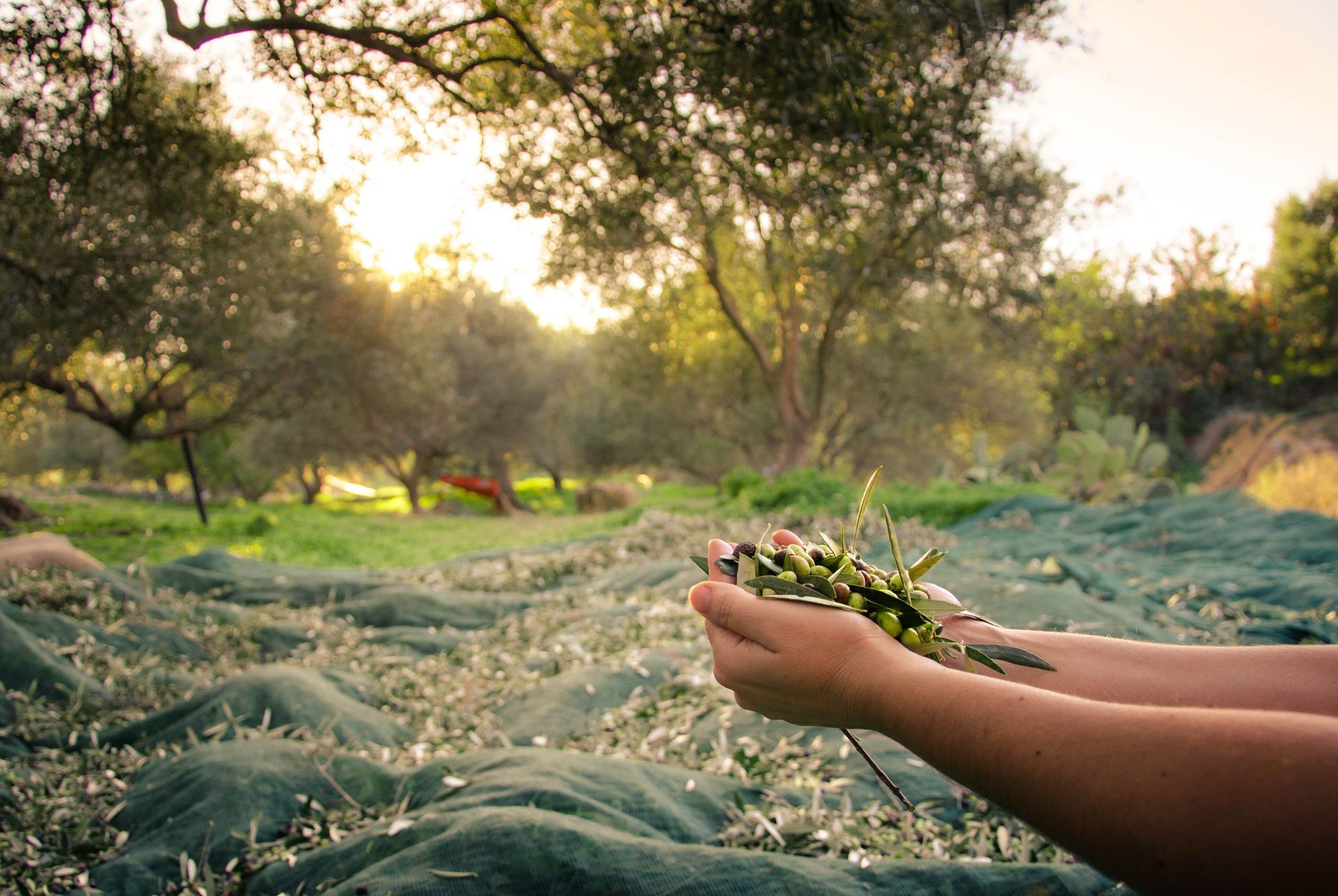 Greece other businesses: Organic farms