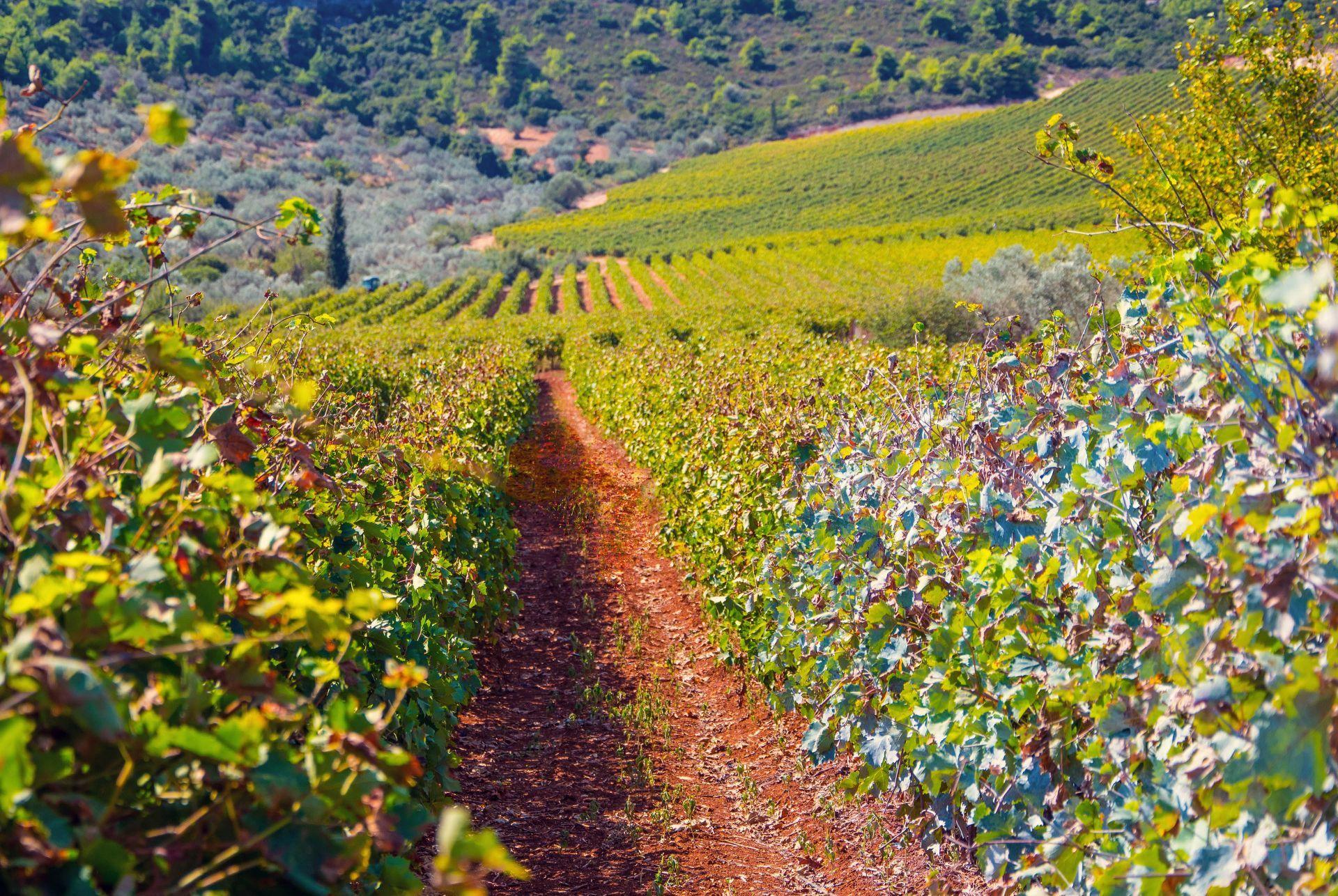 Wineries in Halkidiki