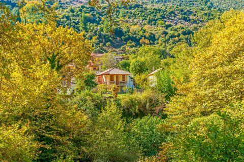 Dense vegetation. Zachlorou village, Kalavryta.