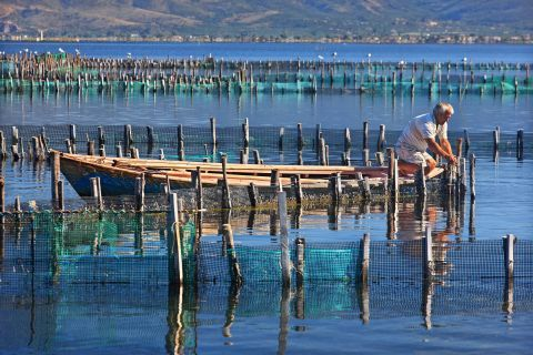 Fishing is a widespread actinity on the Sea Lake of Mesolongi