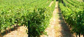Wineries in Corfu