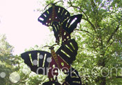 Valley of Butterflies in Theologos, Rhodes