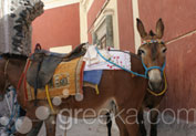 Take A Donkey Ride in Fira, Santorini
