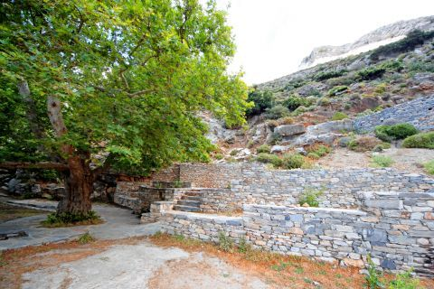 Cave of Zas: Beautiful trees can be spotted around the Cave of Zas