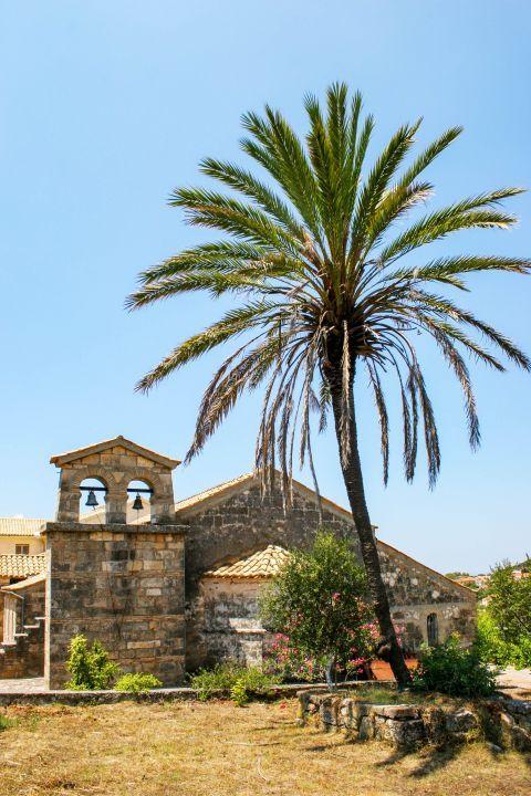 Monastery of Agios Andreas: An impressive palm tree