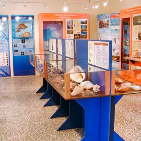 Helmis Natural History Museum: Exhibits of the Museum.