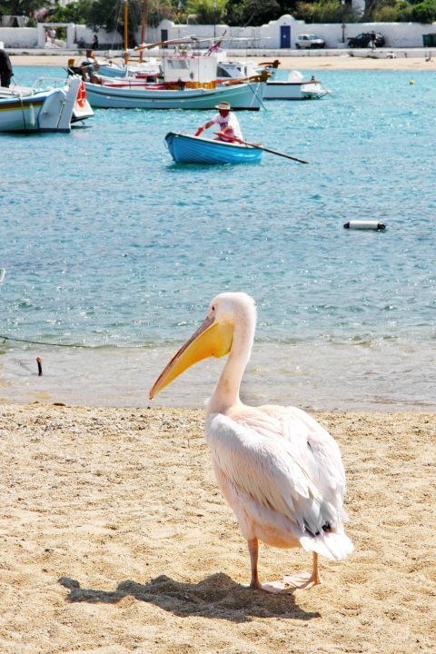 Peter the Pelican: Peter the Pelican was officially declared as the mascot of Mykonos