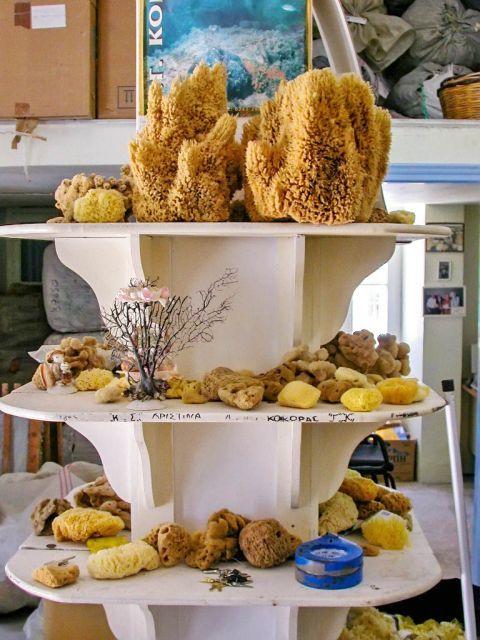 Sponge Factory: Sponge exhibits