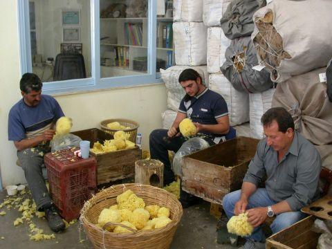 Sponge Factory: Workers of the Sponge Factory