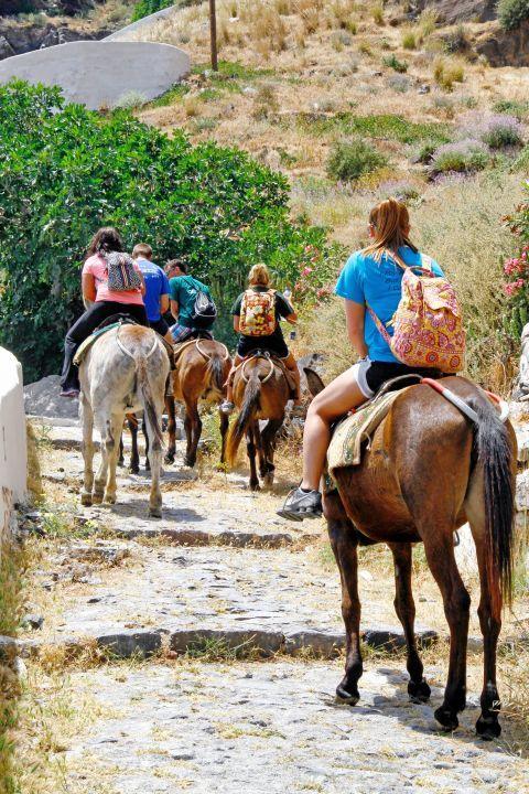 Thirassia Island: Donkeys in Thirassia
