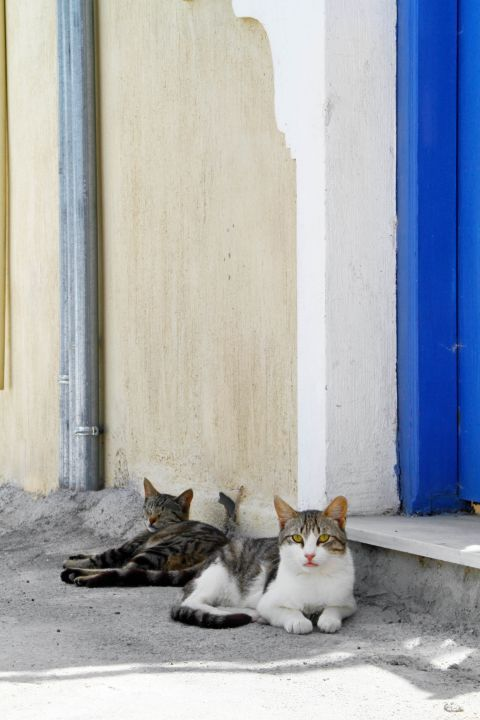 Thirassia Island: Beautiful cats can be found in many spots around Thirassia