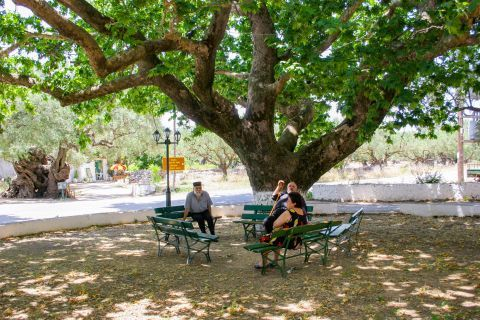 Exo Hora: Some benches under a massive tree that offers refreshing shade.