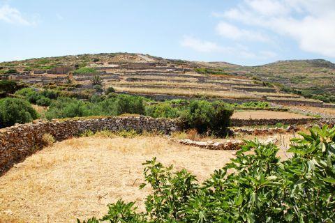 Arkesini: Short vegetation