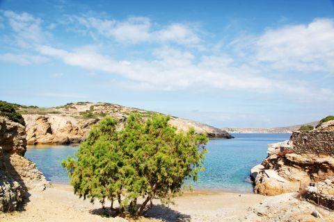 Paradisia: A short tree on the beach