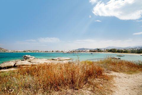 Agia Anna: Short vegetation