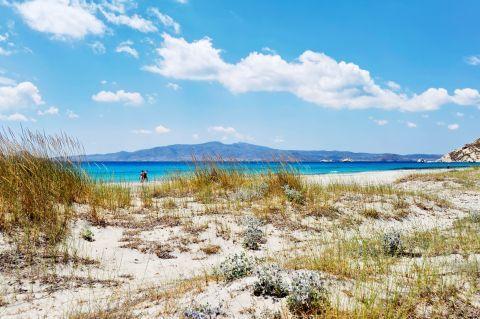 Mikri Vigla: Short vegetation on Mikri Vigla beach