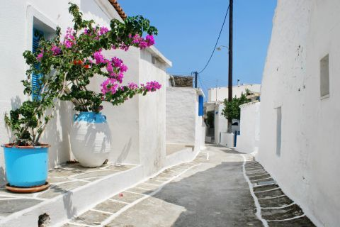 Driopida: Whitewashed alley with some lovely flowers in flower pots.