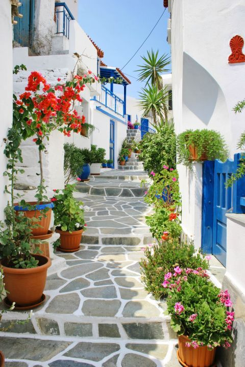 Driopida: Picturesque yards, decorated with colorful flowers.