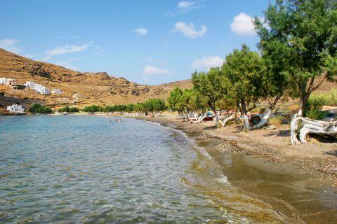 Episkopi: Trees on Episkopi beach