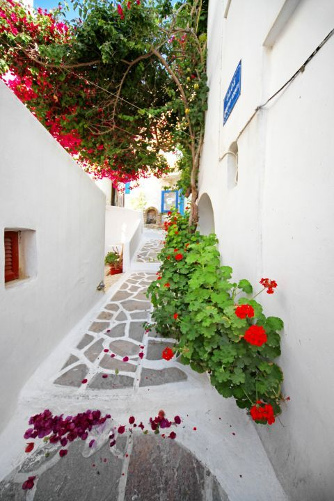 Town: A whitewashed street with flowers