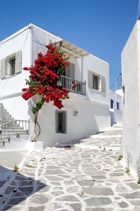 Colorful flowers and whitewashed houses
