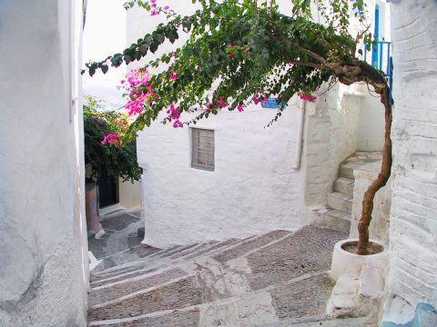 Ano Syros: A short tree