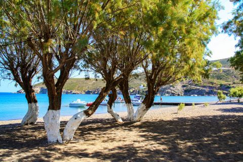 Kambos beach: Beautiful trees, offering refreshing shade on Kambos beach.