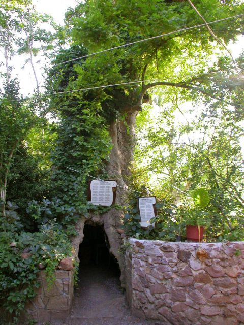Agiassos: A cozy spot inside a tree.