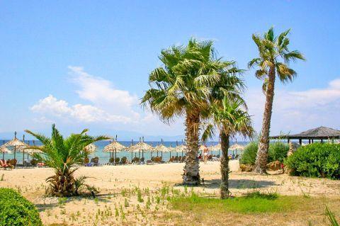 Skala Prinos: Nice palm trees.
