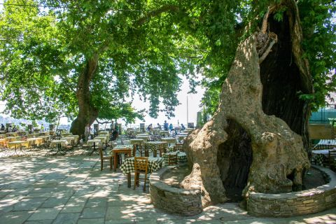 Makrinitsa: Eat and drink surrounded by nature.