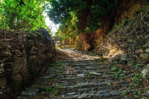 Makrinitsa: A paved alley with impressive nature around in Makrinitsa village, Pelion.