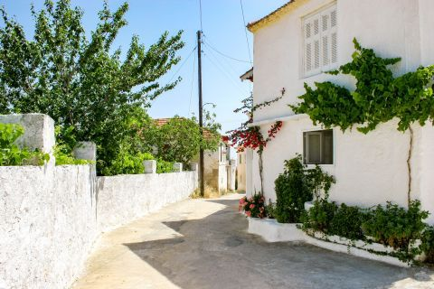 Agios Leon: A quiet spot with some trees and flowers.