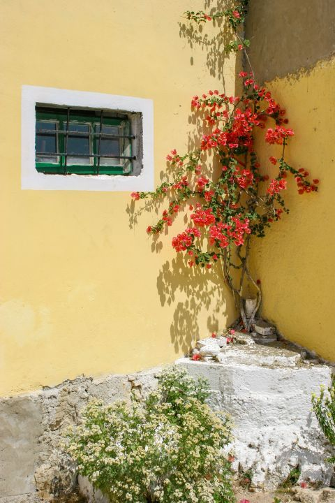 Agios Leon: Light yellow walls and colorful flowers.