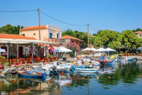 Molivos: Fishing boats on the harbor of Molivos village.