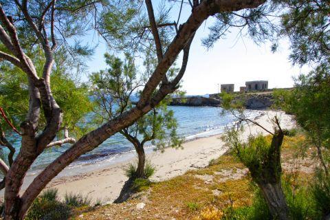 Agios Fokas: Trees and vegetation