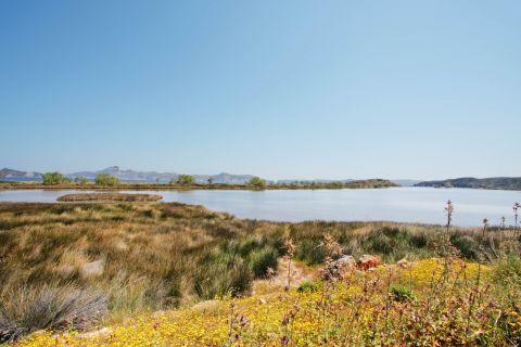 Fatourena: Lush vegetation and flowers