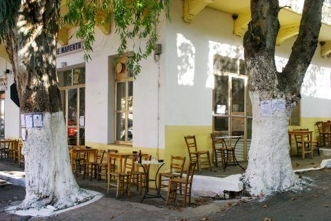 Vamos: A local kafenio