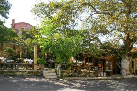 Vamos: A local tavern
