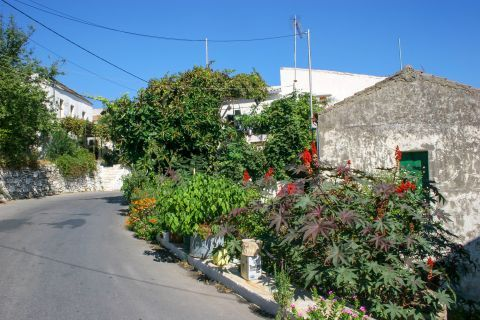 Topolia: Beautiful flowers and old houses