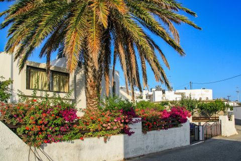 Asklipio: A small, whitewashed house with colorful flowers and an impressive palm tree.