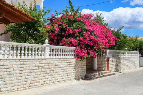 Genadi: Elegant house with fuchsia flowers.
