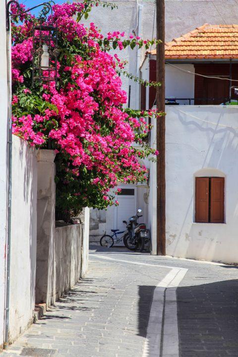Genadi: Fuchsia flowers and traditional houses.