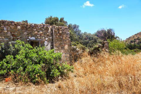 Hohlakas: Ruins, surrounded by dense vegetation.