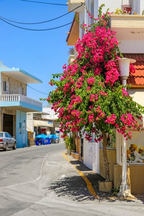 Massari: Colorful flowers.